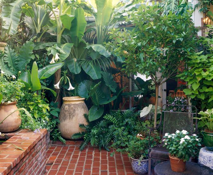 kleinen Garten gestalten schöne üppige großblättrige Pflanzen attraktiver Look große Blumengefäße