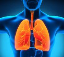Kräuter für die Atemwege, die das Immunsystem stärken