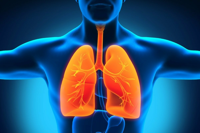 Kräuter für die Atemwege atemübung lunge