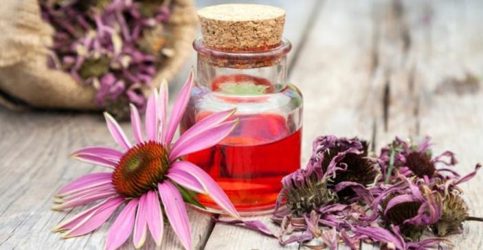 Kräuter für die Atemwege zitrone echinacea