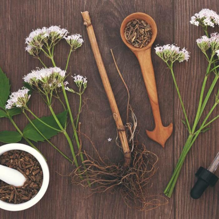 kräuterlexikon heilpflanzen baldrian