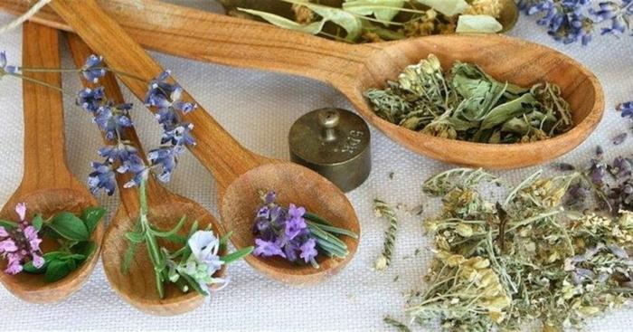 kräuterlexikon heilpflanzen dosierung