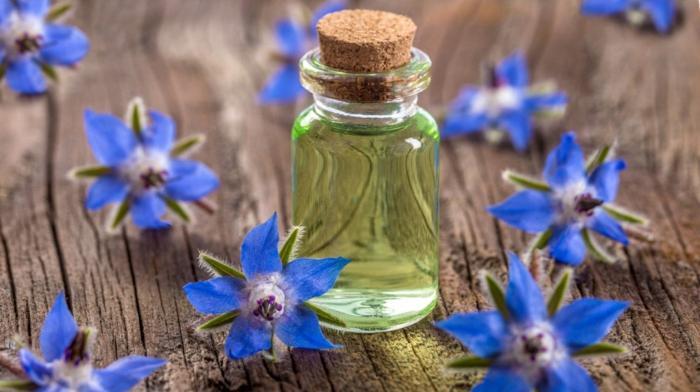 kräuterlexikon heilpflanzen lavendel blutenwasser borretsch