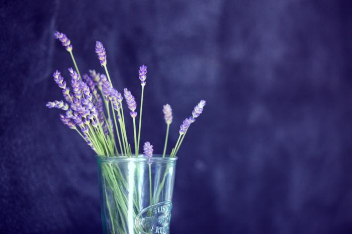 kräuterlexikon heilpflanzen strauss lavendel