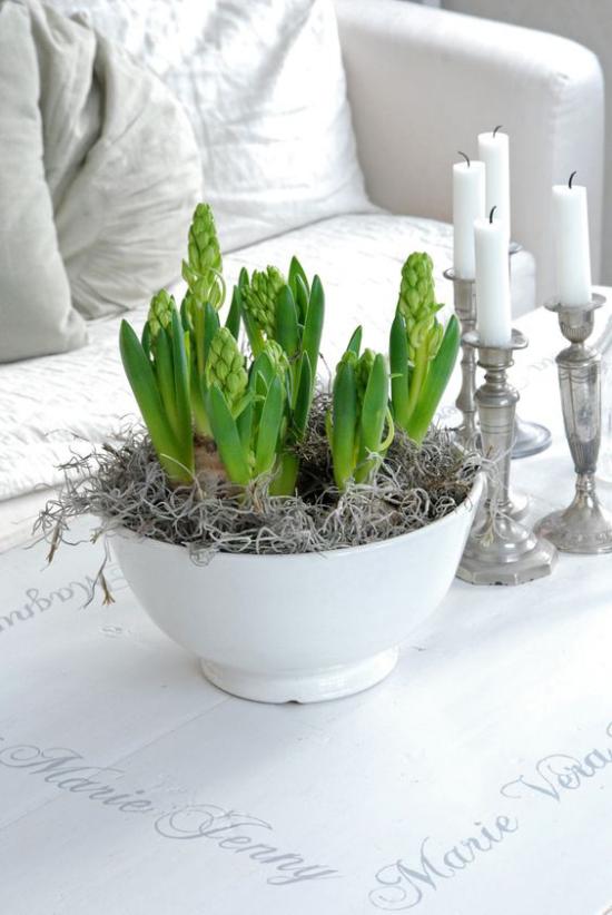 skandinavische Frühlingsdeko Hyazinthen im weißen Topf auf dem Kaffeetisch weiße Kerzen silberne Kerzenständer