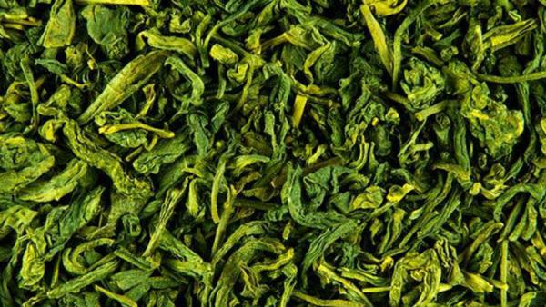 vitalisierende Tees Grüntee grüne Tlätter darin steckt viel Energie