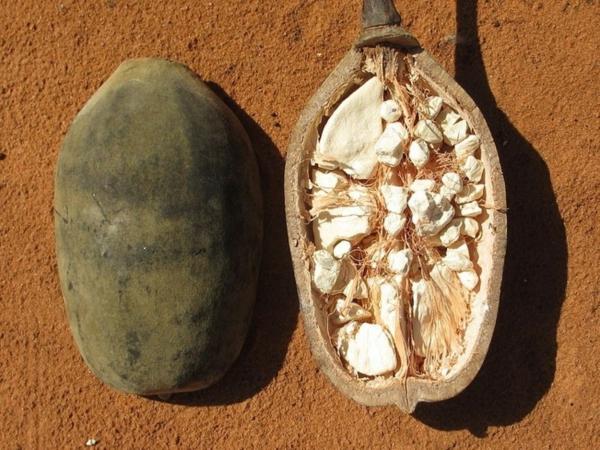 Baobab-Frucht Einschnitt Superfrucht gesundheitliche Vorteile