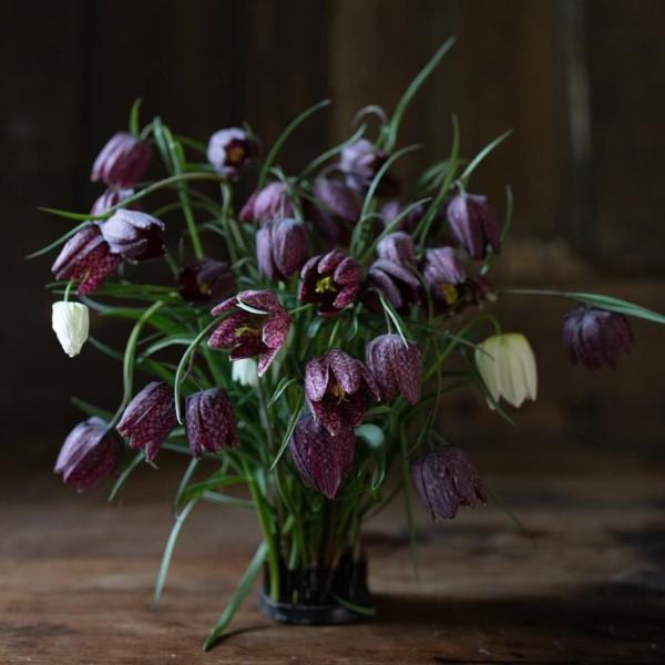 Die Schachbrettblume sorgt für Blütenzauber im Frühlingsgarten hübsche schnittblumen zierblumen