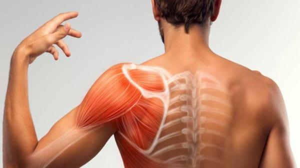 Die gesundheitlichen Vorteile von L-Prolin Muskelgewebe