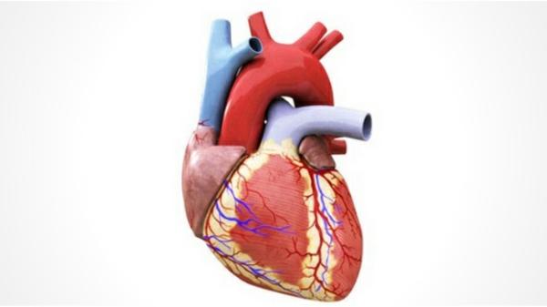 Die gesundheitlichen Vorteile von L-Prolin gesundes Herz