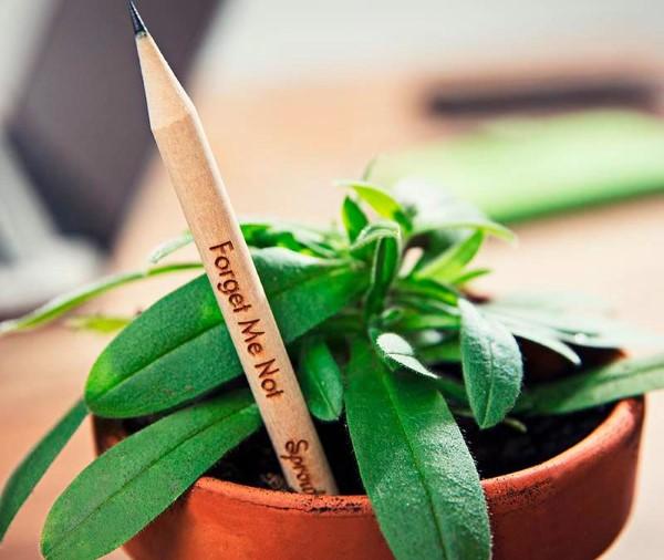 Originelle und praktische Geschenkideen für Gartenbesitzer im Frühling bleistifte zum einpflanzen