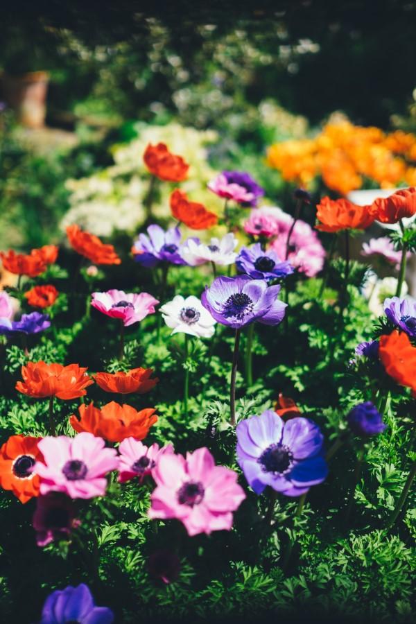 Originelle und praktische Geschenkideen für Gartenbesitzer im Frühling blumen schön garten