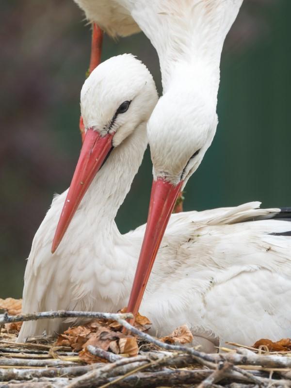 Storch basteln – frische Ideen und Anleitung zum Frühling storch familie niedlich