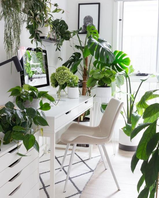 Tropische Deko im Home Office weiße Möbel Teppich viele grüne Topfpflanzen ansprechende Raumatmosphäre