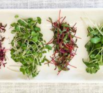 Microgreens – Wie und warum Sie das Superfood selber anbauen