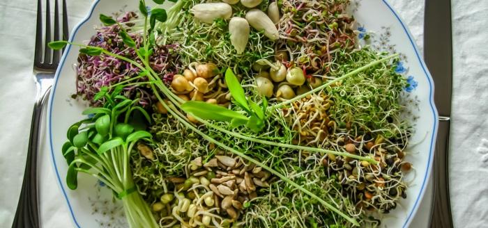 microgreens lecker alfalfa mix