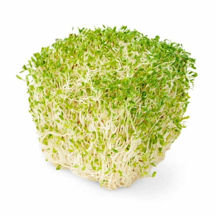 microgreens lecker alfalfa
