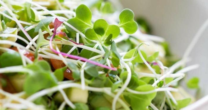 microgreens lecker kichererbsen salat