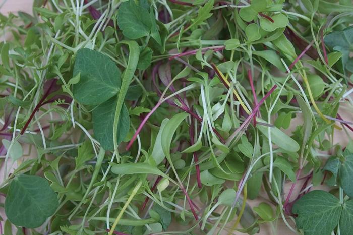 microgreens lecker knackige salate