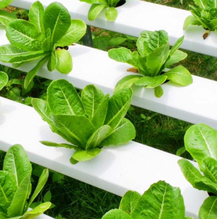 microgreens lecker salat