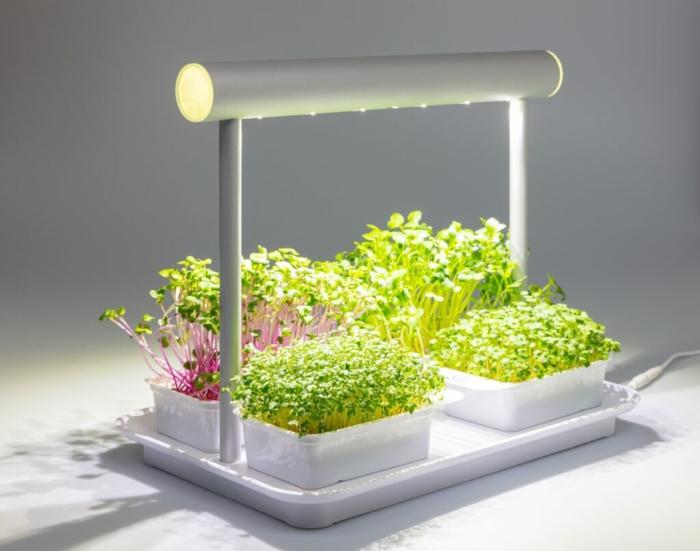 microgreens vitamine lampe