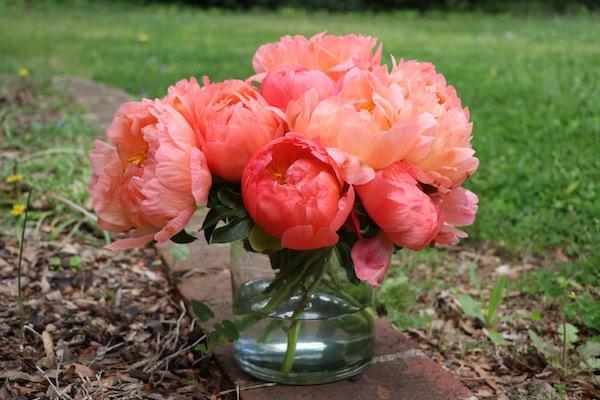 pfingstrosen pflege blümen für die vase