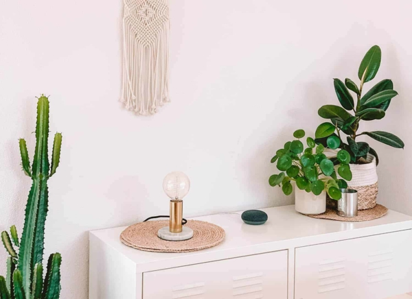 ufopflanze pilea kommode dekorieren zimmerpflanzen