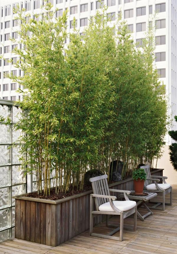 Bambus Zimmerpflanze Phyllostachys aurea Bambusarten Terrasensichtschutz