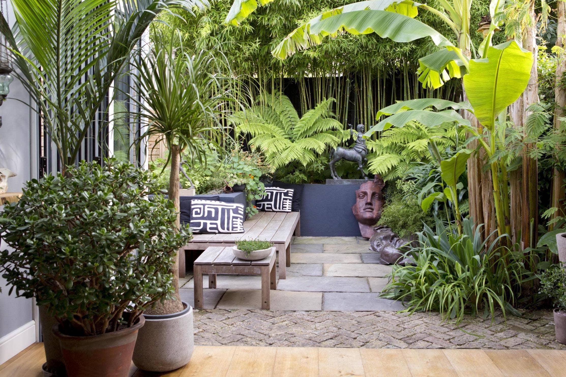 Die-Bambus-Zimmerpflanze-ist-eine-robuste-Topfpflanze-Info-und-Pflegetipps