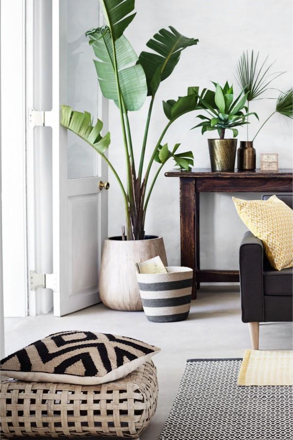Bananenpflanze Pflege Tipps und Wissenswertes – so können Sie Exotik nach Hause bringen eingangsbereich große pflanze boho