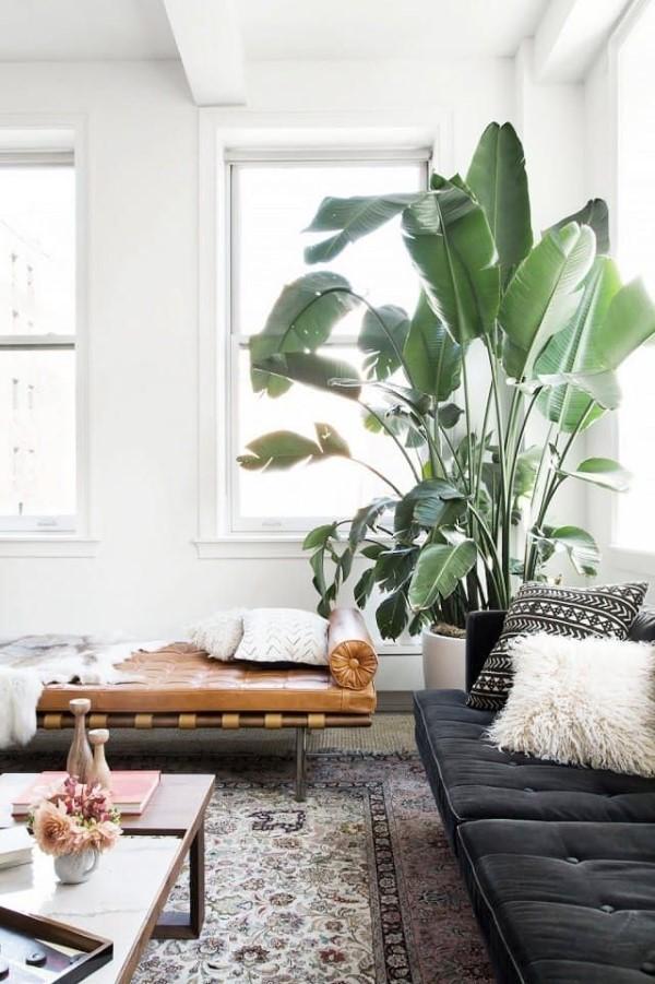 Bananenpflanze Pflege Tipps und Wissenswertes – so können Sie Exotik nach Hause bringen große zimmerpflanze sonnig
