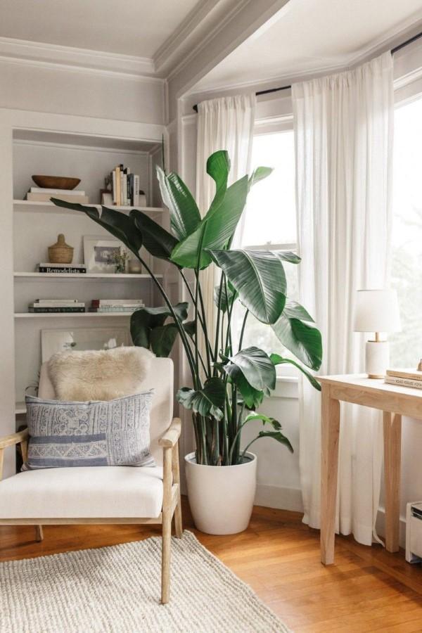 Bananenpflanze Pflege Tipps und Wissenswertes – so können Sie Exotik nach Hause bringen leseecke sonnenschutz