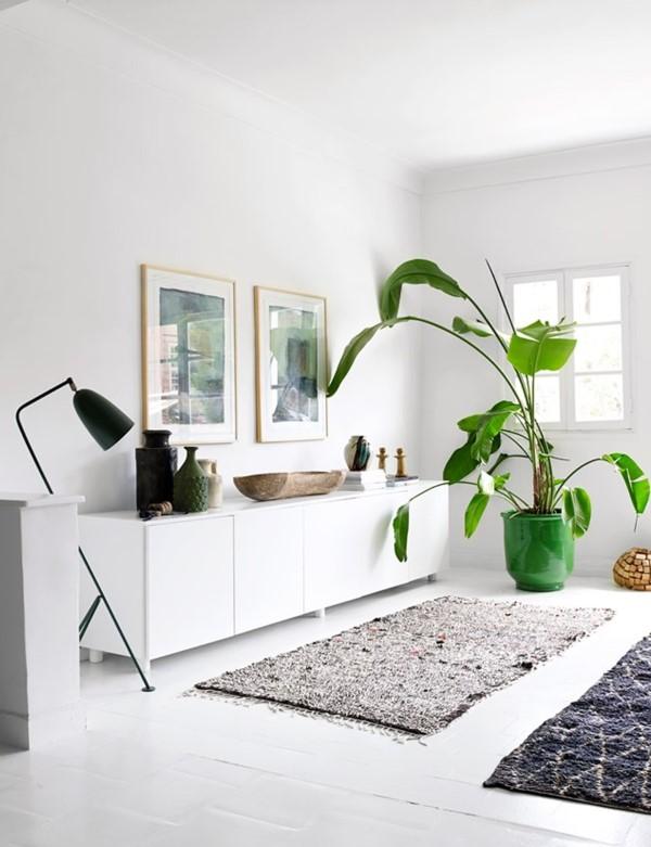 Bananenpflanze Pflege und Wissenswertes – so können Sie Exotik nach Hause bringen wohnzimmer banane ideen deko