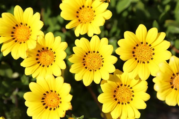 Gelbe Frühlingsblumen für Garten und Balkon – sonnige Arten und Pflegetipps gelbe blumen im garten