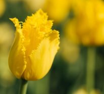 Gelbe Frühlingsblumen für Garten und Balkon – sonnige Arten und Pflegetipps