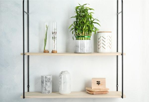 Glücksbambus Feng Shui Zimmerpflanze Pflege