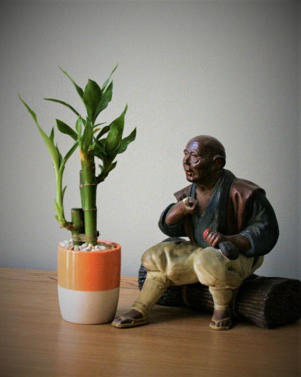 Glücksbambus Zimmerpflanze Dracena sanderiana Pflege Buddhastatue