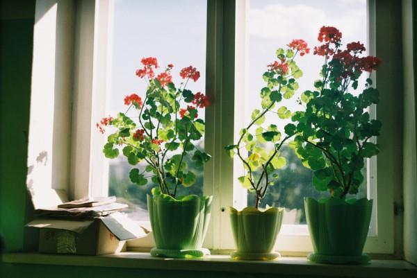 Gut schlafen durch luftreinigende Zimmerpflanzen! fensterbank blumen