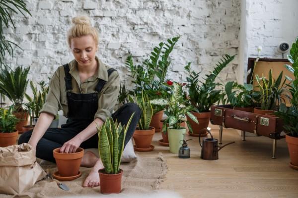 Gut schlafen durch luftreinigende Zimmerpflanzen! gesund wohnen mit pflanzen