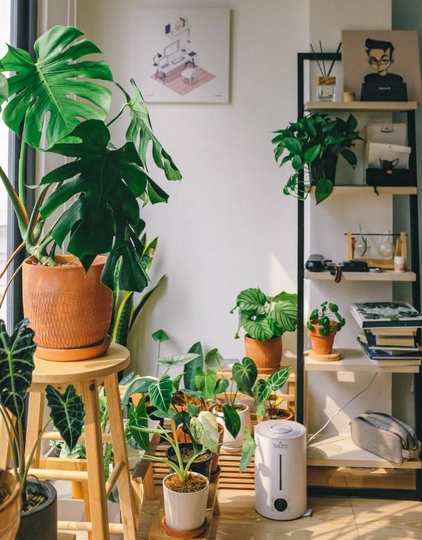 Gut schlafen durch luftreinigende Zimmerpflanzen! pflanzen gesundheit zu hause