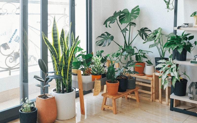 Gut-schlafen-durch-luftreinigende-Zimmerpflanzen-