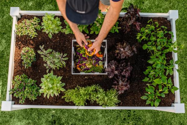 Hochbeet in Schlüssellochform Kompostkorb wichtiges Element Gemüse und Küchenkräuter anbauen