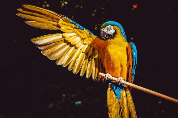 Papagei Tulpen im Garten und Topf – Wissenswertes, Pflegetipps und Sorten papagei ara vogel