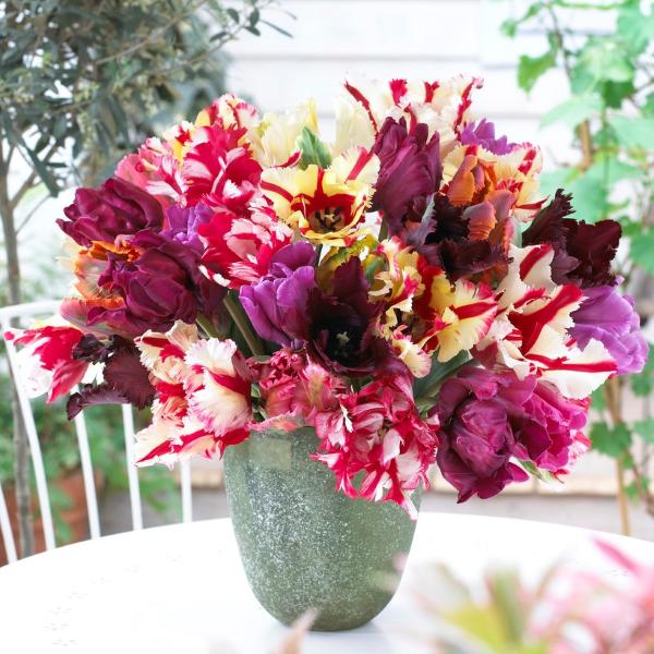 Papagei Tulpen im Garten und Topf – Wissenswertes, Pflegetipps und Sorten papagei mix blumen