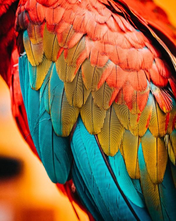 Papagei Tulpen im Garten und Topf – Wissenswertes, Pflegetipps und Sorten papagei vogel gefieder