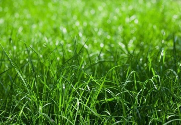 Rasenpflege im Frühjahr Gartentipps Rasen