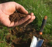 Die richtige Rasenpflege im Frühjahr – Nützliche Gartentipps und Ideen