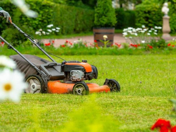 Rasenpflege im Frühjahr Gartentipps und mähen
