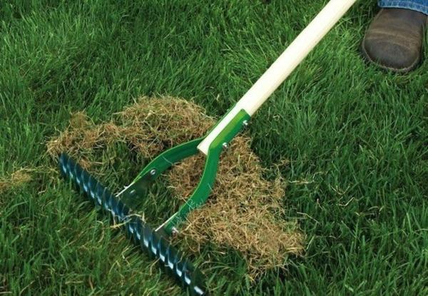 Rasenpflege im Frühjahr Tipps Garten harken
