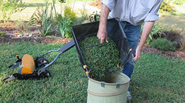 Rasenpflege im Frühjahr Tipps Garten
